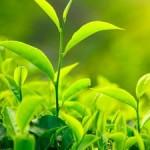 maslo_tea_tree